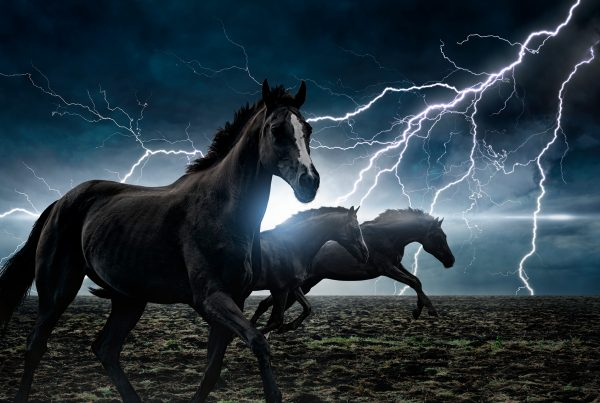 Plotaverse 18_07_15_I-Love-Horses-Day-600x403 Daily Challenges